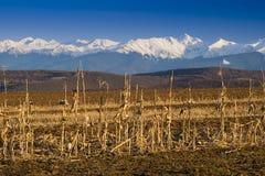 Cordon cultivé par crêtes de neige de chaîne de montagne Images stock
