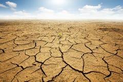 Cordon sec avec la prise de masse criquée Photos libres de droits