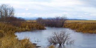 Cordons humides canadiens avec la vue des montagnes rocheuses Images stock