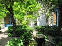 Cordovan Nice garden. Nice and colorful garden, located in Cordoba Royalty Free Stock Images