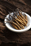Cordyceps sinensis Stock Images