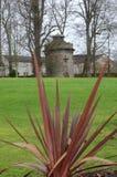 Cordyline och torn Royaltyfria Bilder