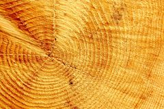 Core of the cut tree, as background Royalty Free Stock Photography