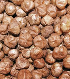 Core hazelnuts without shells in a pile Royalty Free Stock Images