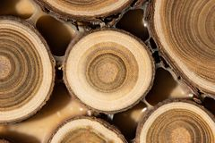 Core of juniper and sandalwood background Stock Photos