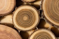 Core of juniper and sandalwood background Stock Images