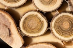 Core of juniper and sandalwood background Royalty Free Stock Photography