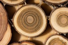 Core of juniper and sandalwood background Royalty Free Stock Photos