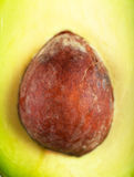 Core Of Avocado Stock Photography