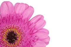Core of pink Gerbera close up macro cornered Royalty Free Stock Images