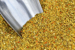 Coregone lavarello dell'ape Fotografie Stock
