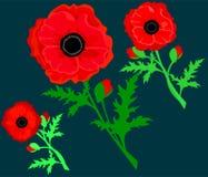 Красный мак изолированный на белой предпосылке Цветки и трава мака вектора красные романтичные красные маки Карта с маками r иллюстрация штока