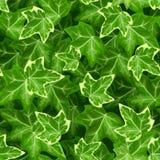 Безшовная картина с листьями плюща также вектор иллюстрации притяжки corel Стоковые Изображения RF