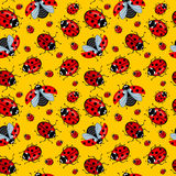 Corel seamless pattern. Cartoon ladybugs red on a yellow background Royalty Free Stock Image