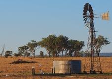 Corellas che gode dell'acqua dal mulino a vento Fotografia Stock Libera da Diritti