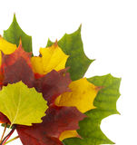 Cores 2 do outono Foto de Stock