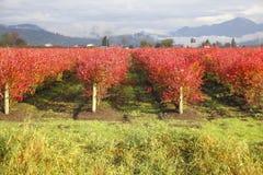 Cores agrícolas Fotos de Stock Royalty Free