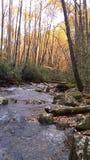 Cores alaranjadas bonitas da queda em grandes montanhas do smokey fotos de stock