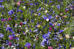 Cores alegres da flor Foto de Stock Royalty Free