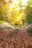 Cores amarelas do outono fotografia de stock