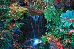 Cores bonitas da queda no jardim 2 de Buchart Imagens de Stock