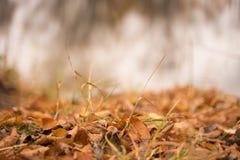 Cores bonitas do outono com folhas do ouro fotografia de stock