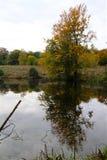 Cores bonitas pelo lago da floresta imagens de stock