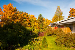 Cores brilhantes do outono em árvores do quintal Fotografia de Stock