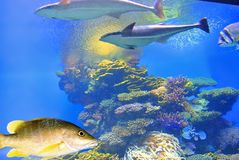 Cores brilhantes dos corais Eilat israel Fotos de Stock