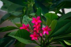 Cores brilhantes, flor Foto de Stock