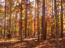 Cores brilhantes nas madeiras da queda Foto de Stock