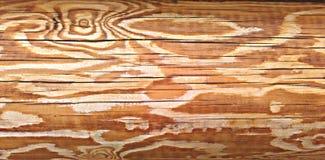 Cores claras do log de madeira da textura Fotografia de Stock Royalty Free