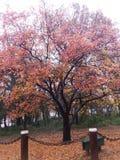 Cores da árvore fotos de stock