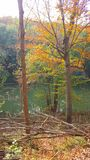 Cores da árvore da queda foto de stock royalty free