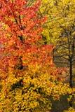 Cores da árvore e das folhas no outono imagens de stock royalty free