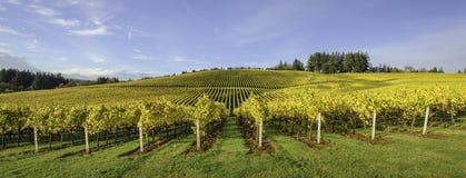 Cores da agricultura e da queda de vinhedos de Oregon Imagem de Stock