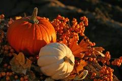 Cores da colheita Imagem de Stock Royalty Free