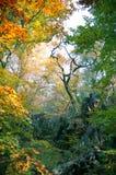 Cores da floresta imagens de stock
