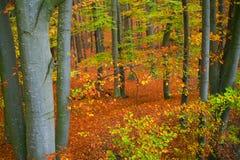 Cores da floresta da queda fotografia de stock royalty free