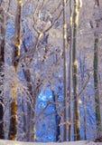 Cores da geada da manhã do inverno Foto de Stock Royalty Free