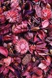 Cores da natureza. Imagens de Stock Royalty Free