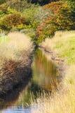 Cores da natureza nos prados Foto de Stock Royalty Free