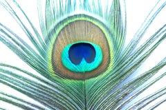 Cores da pena do pavão do close up da natureza fotografia de stock