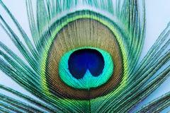 Cores da pena do pavão do close up da natureza fotos de stock