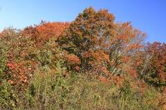 Cores da queda ao longo de Ridge Parkway azul imagens de stock royalty free
