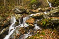 Cores da queda, cascata da cachoeira, movimentação da skyline Imagens de Stock