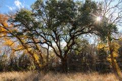 Cores da queda de Texas Fotografia de Stock Royalty Free