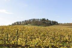 Cores da queda de vinhedos meados de do vale de Willamette em Oregon ocidental imagem de stock royalty free