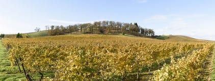 Cores da queda de vinhedos meados de-Willamette do vale em Oregon ocidental Imagem de Stock