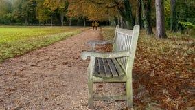 Cores da queda do outono em um parque com uma cadeira fotos de stock